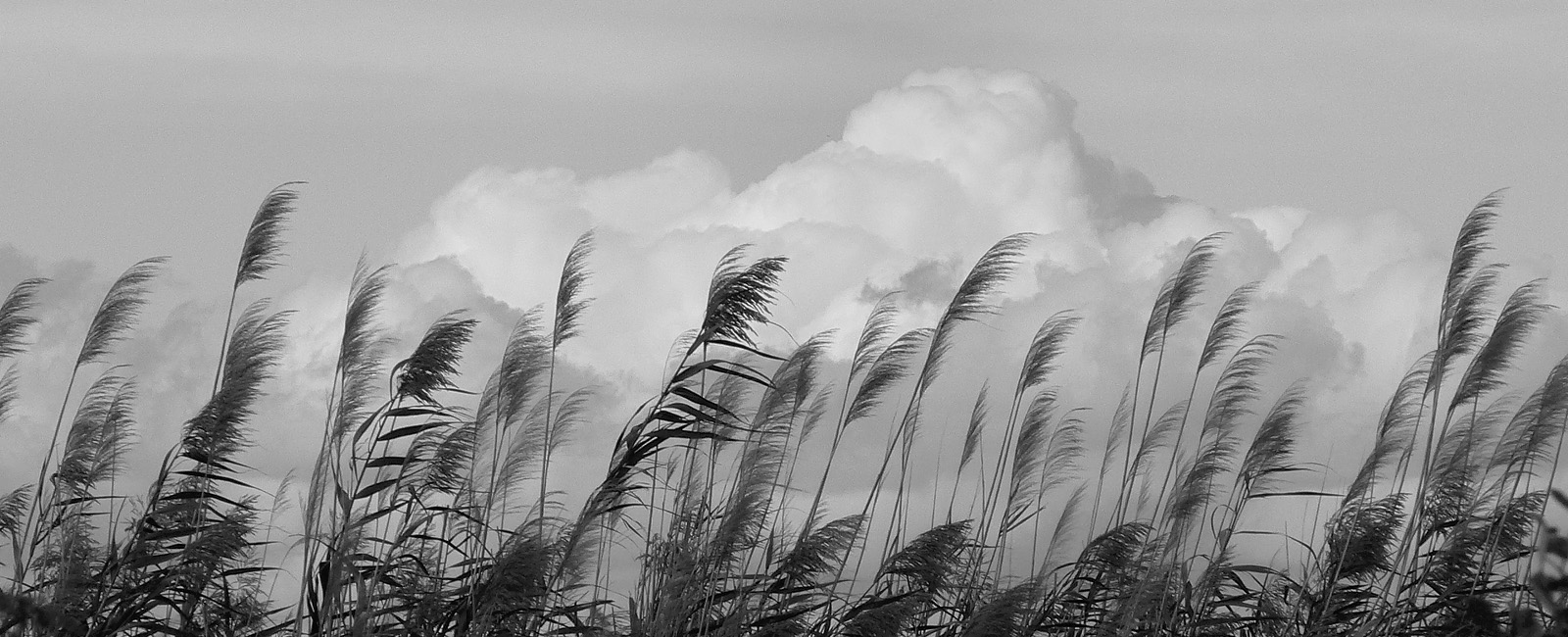 Foto Albert Folch